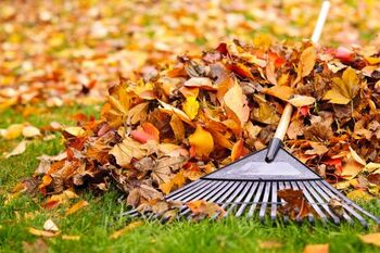 Fall Clean Up services in Garner North Carolina